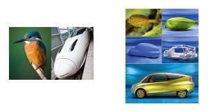 Trem bala e carro - Biomimética