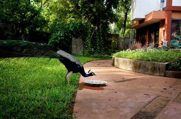 Auroville 14