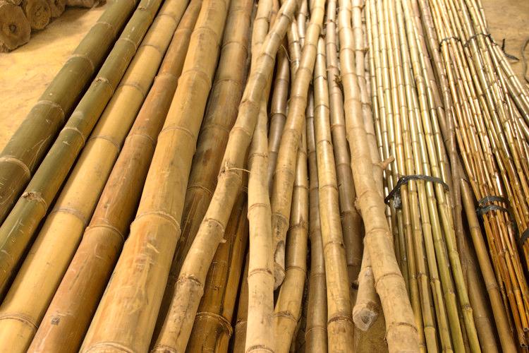 Bambu - Capa Post