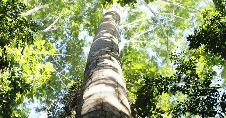 Floresta - gera lucro