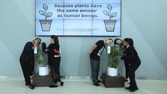 Planta sofreu bullying
